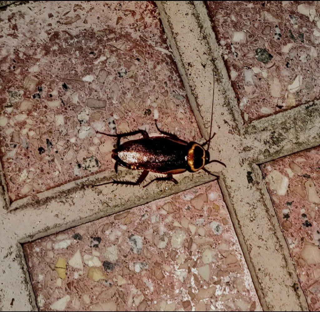 Zeilen en kakkerlakken, hoe voorkom je ze?