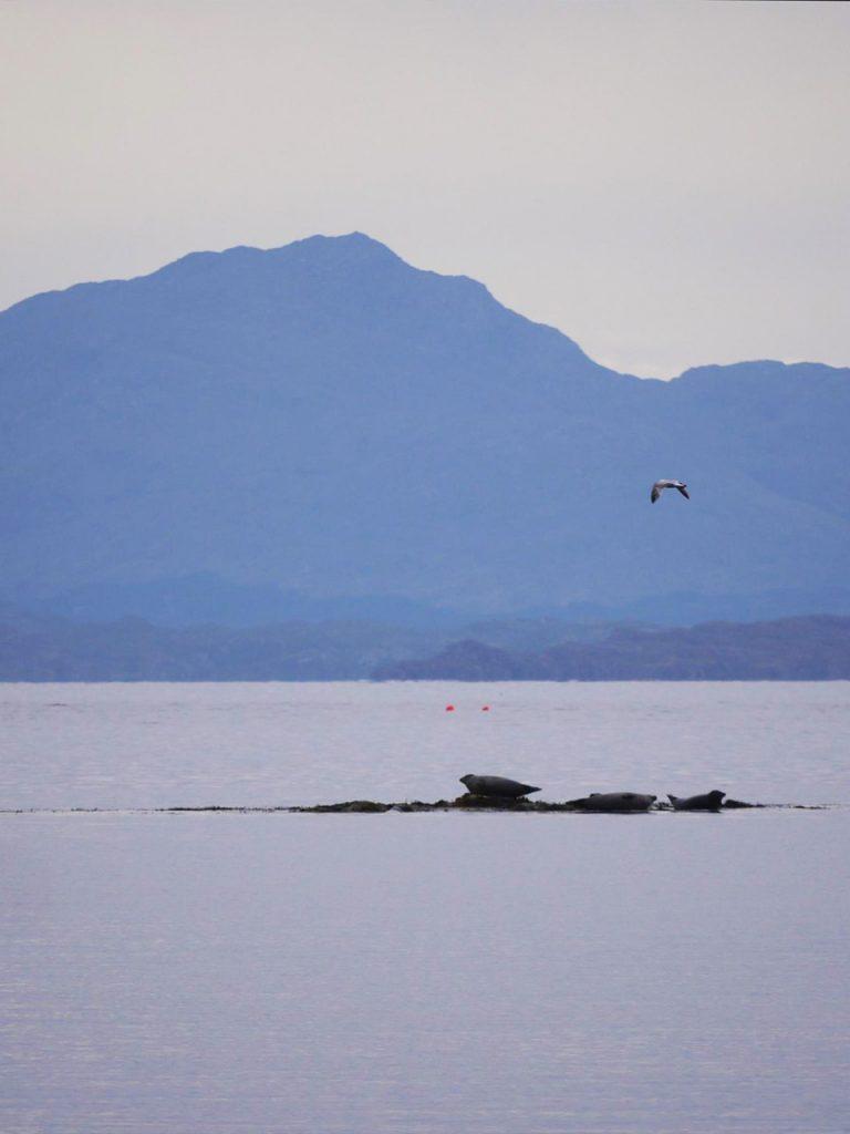 Zeehonden Schotland