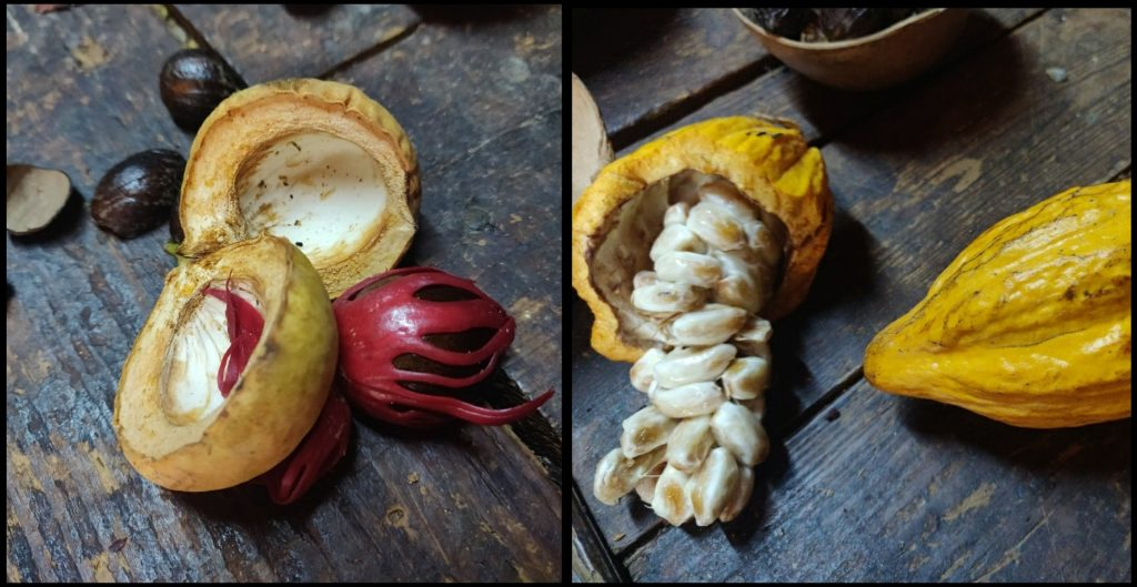 Fruit inslaan van abrikozen tot cacao bonen