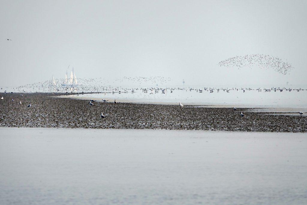 De Waddenzee door Pieter Holtland