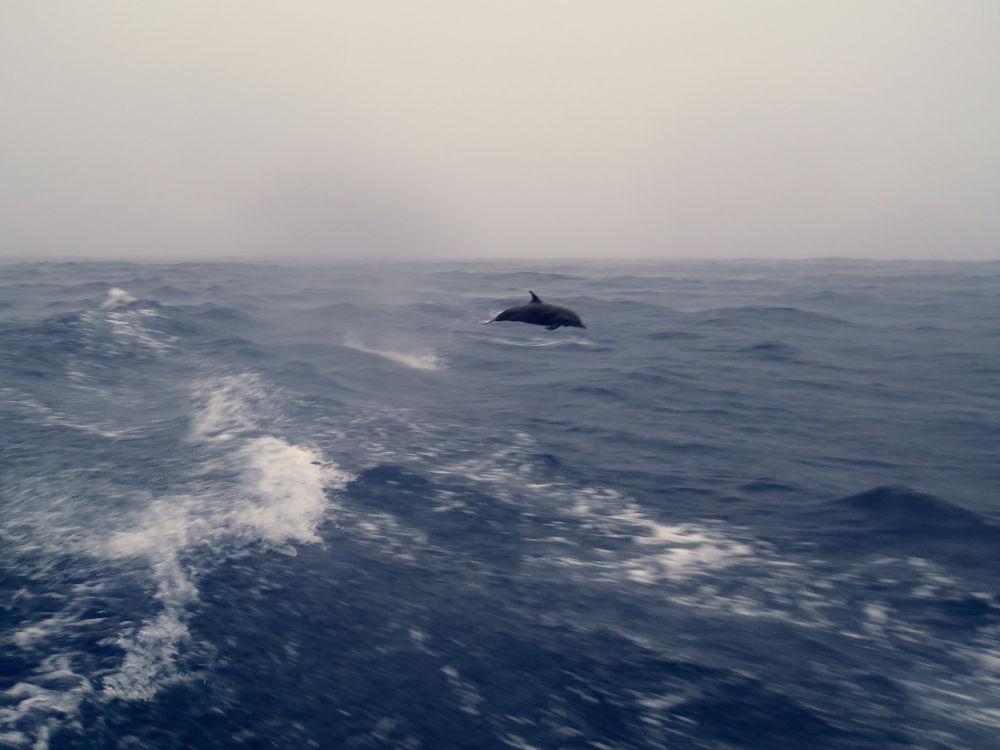 Marco Nannini Dolphin